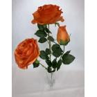 Bukiet Róża X 3 gigant kolor 5